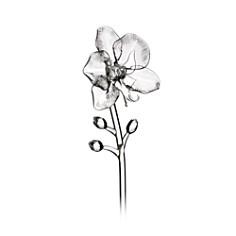 Waterford Jeff Leatham Fleurology Orchid Flower Object - Bloomingdale's Registry_0
