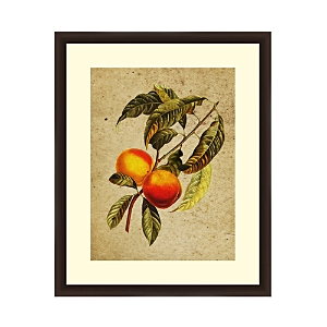 A vintage-style apricot illustration is framed with an artful decorative molding. Distinctive designs by Ptm Images add instant character to any room.