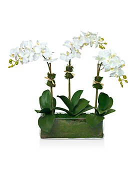 Diane James Home - Phalaenopsis Faux Floral Orchids