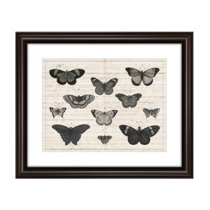 Ptm Images Butterfly Study Wall Art