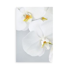 "Art Addiction Inc. Orchids Wall Art, 60"" x 40"" - Bloomingdale's_0"