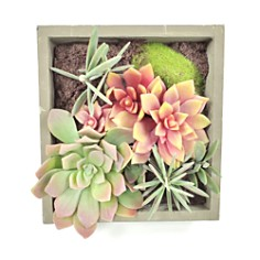 Gold Eagle Mixed Succulents Square Wall Planter - Bloomingdale's_0