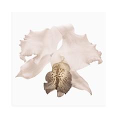 Art Addiction Inc. - White Slipper Orchid Wall Art