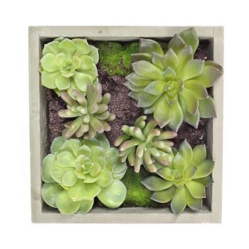 Gold Eagle - Mixed Succulents Square Wall Planter
