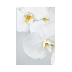 "Art Addiction Inc. Orchids Wall Art, 47"" x 35"" - Bloomingdale's_0"